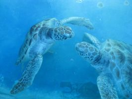 Sea turtles by MacGeekVer