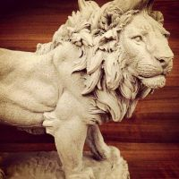 Lion by IgorGosling