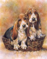 Basset Hounds by DanMcManis