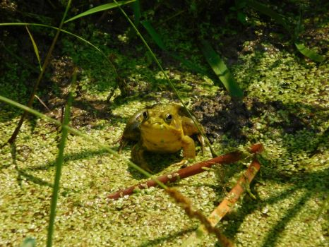 Frog! 2 by Jyl22075
