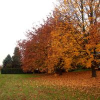 Autumn Trees 02 by kuschelirmel-stock
