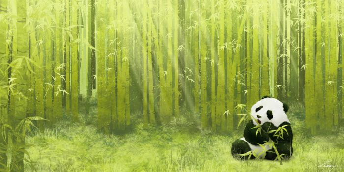 Bamboo Forest by Zarory