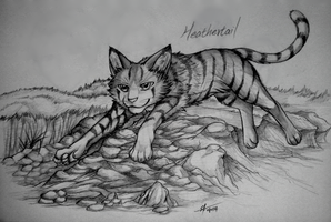 Warriors: Heathertail by Marshcold
