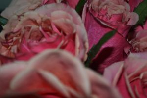 Pink Roses 3 by tastybedsore