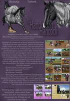 PD Handdown Hancock - Quarter Horse by painted-cowgirl
