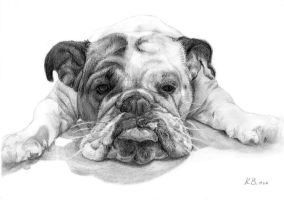 Bulldog by SitaraGirl