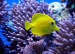 Lormet-aquarium-0254sml by Lormet-Images