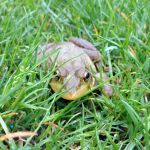 Frog in the Grass by Pr0teusUnbound