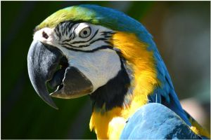 Parrot 03 by Skip1967