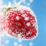 Bokeh Berry by Kameolynn