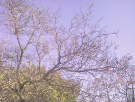 branches by adipotter