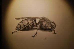 Wasp by glypheus