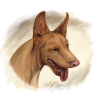 Pharaoh Hound Speedpaint by Thilil