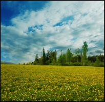 BG Dandelion Field by Eirian-stock