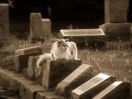 Headstone Cat by jmarie1210