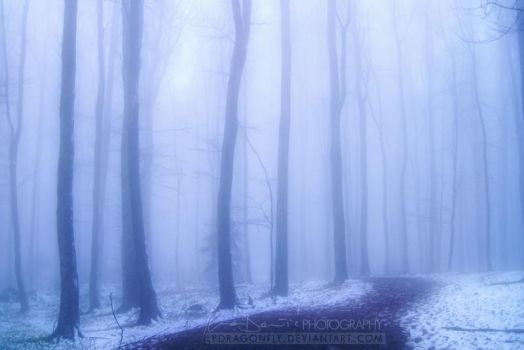 echoes of winter by ivadesign