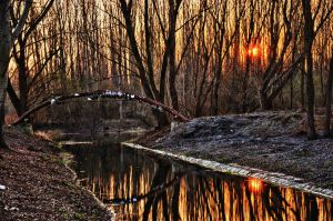 Floodplain Forest Sunset HDR2 by Seth890603