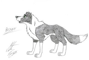 Kitara the wolfhound - Benny by MortenEng21
