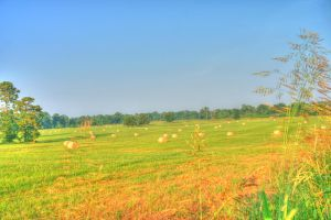 Pasture HDR One by Dramier
