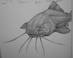 Catfish Study pt 1 by DelightsJD