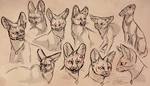 Serval Face Practice by Owl-Flight