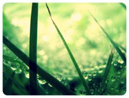 Dew by WillowxHeart
