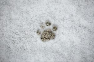 cold paw... by JasonKaiser