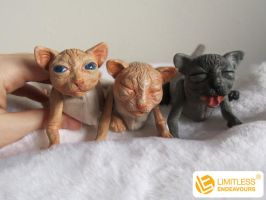 Sphynx Kitten Sneak Peek by LimitlessEndeavours