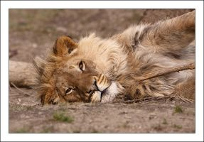 Akimba: Power nap by AF--Photography