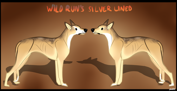 Wild Run's Silver Lined by WildRunKennels