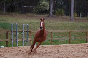TB front on turning gallop by Chunga-Stock