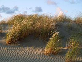 Dunes 2 by rici66
