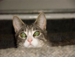 Did you know cat eyes glitter? by ayukat