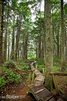 path to cape flattery by stranj