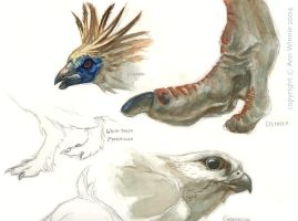 bird study page by d4rk1n