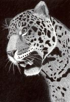 Ballpoint Leopard by Cindy-R