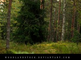forest 10 by woodlandSTOCK