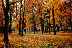 Fall in High Park by KMourzenko