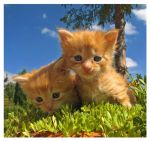 Stock kittens by Shailla