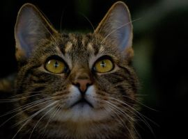 cat: look up by morho