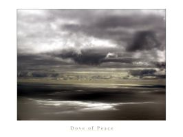 Dove of Peace by paddimir