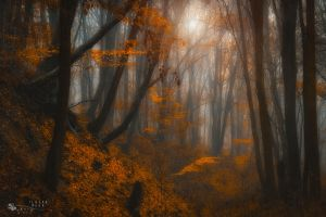 on the border of another world by ildiko-neer