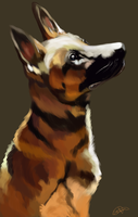 Dog Study by TheBlueFeline