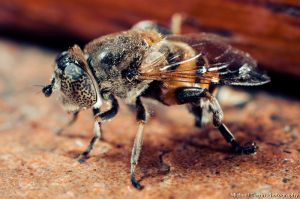 Bee - extension tube test I by TheSoftCollision