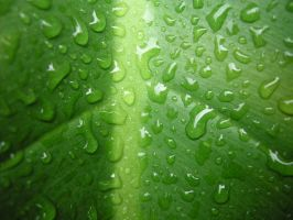 wet green by Dinuguan
