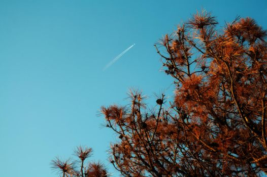 Tree and Jet  051417 by KeithPurtell