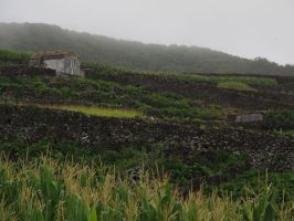 Country Acores by FiLH