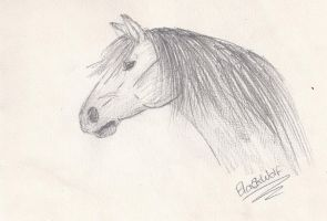 Horse Sketch by Buggie1112