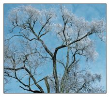 Ice tree.L1040128, with story by harrietsfriend