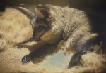Day 298 - Bat-eared Fox by MonsterBrand